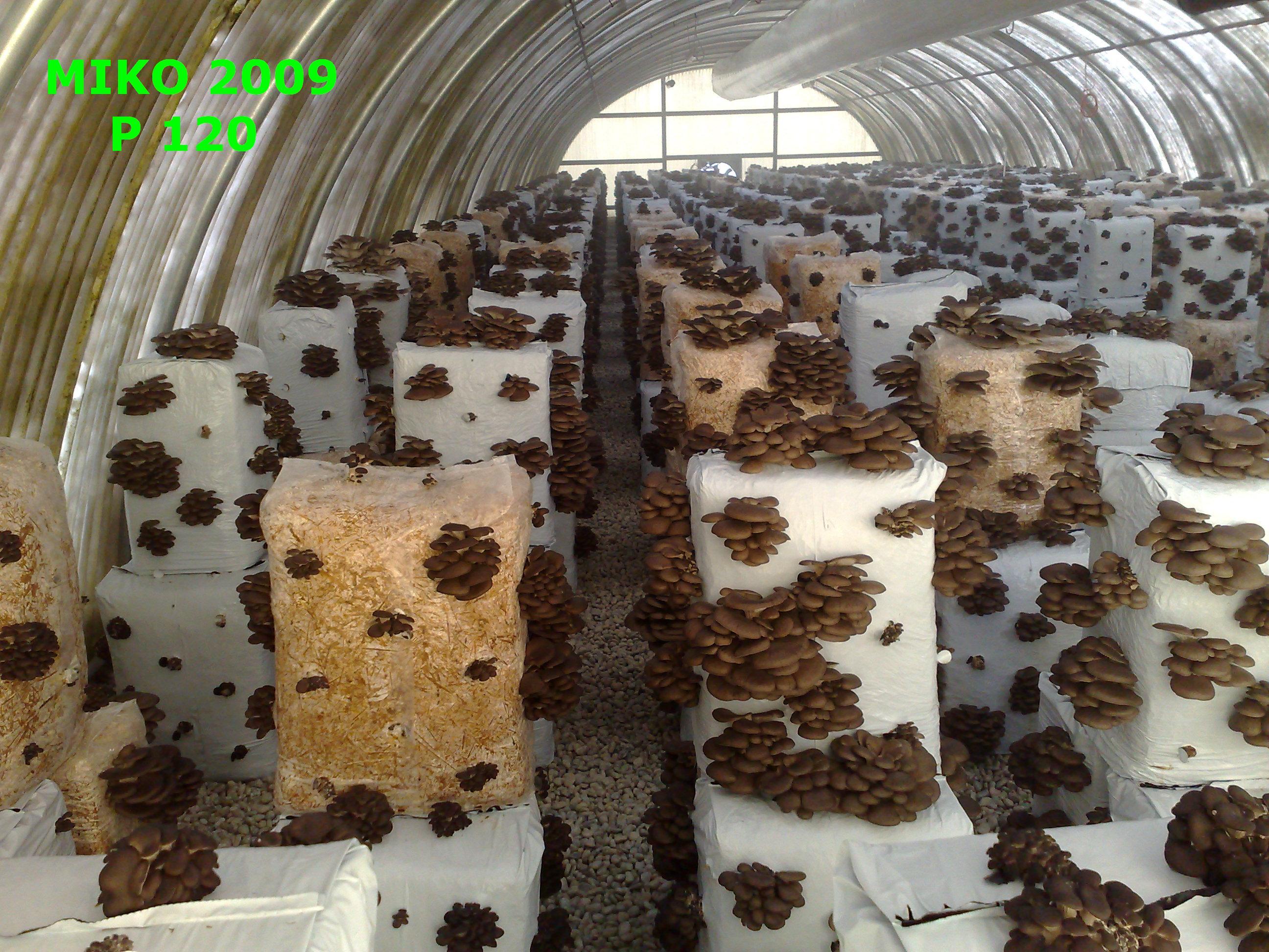 Serra coibentata in produzione funghi a ciclo chiuso - Serre da giardino usate ...