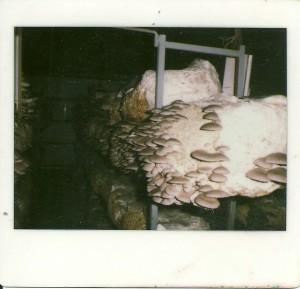 Tre piani di legno
